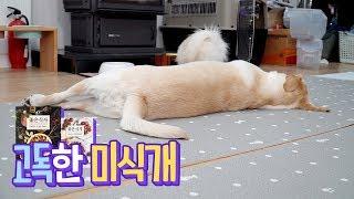 고독한 미식개 🐶 좋은식사 리뷰