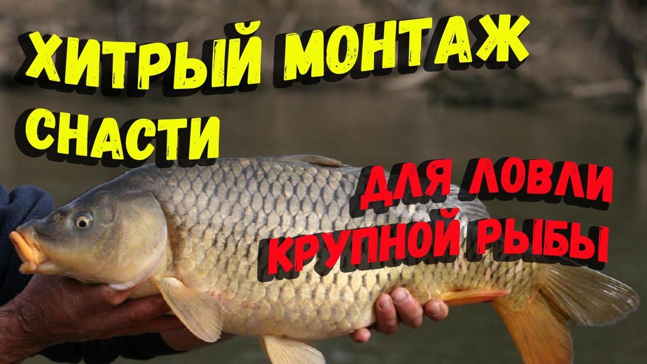 Хитрый монтаж снасти для ловли мирной рыбы