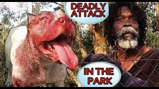 THIS MAN KILLED AN UNLEASHED PIT BULL AFTER IT ATTACKED HIM AND HIS DOG!
