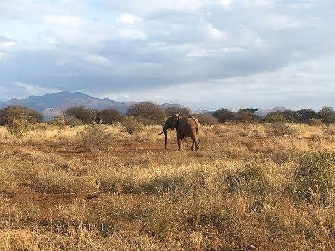 Safari im Nationalpark Tsavo West