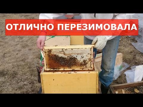 Чистое искусство (2016) — смотреть онлайн — КиноПоиск