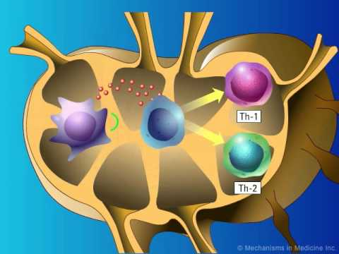 Stimulation Of Adaptive Immunity