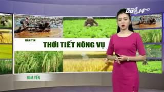 VTC14   Thời tiết nông vụ 24/11/2017   Thời tiết thuận lợi cho sản xuất nông nghiệp  tại Tây Nguyên