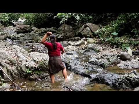 Primitive Technology - find  Taro- cook  eating delicious  60