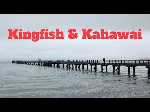 NZ Wharf Fishing |  Kingfish & Kahawai | Fishing In The Rain | Spring 2017