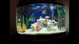 29 gallon tank how to keep african cichlids alive and healthy