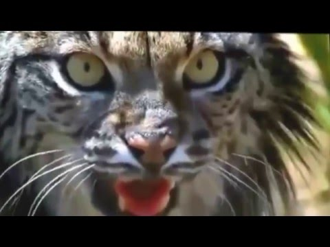 The animal world-Documentary-The Wild Cats-The animal world best