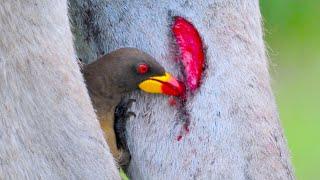 15 Dangerous Birds You Should Run Away From