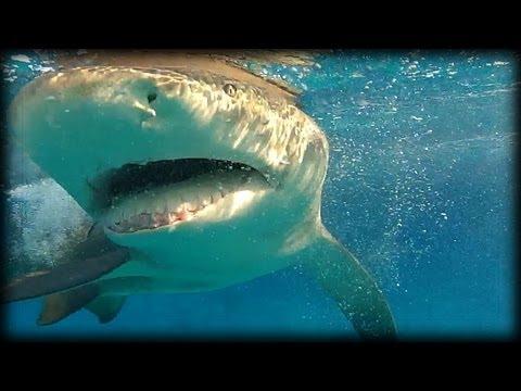 Lemon Sharks 03 Music