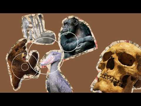 Música en la Prehistoria