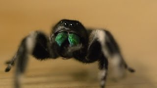 Spider hunts fly - Spider House - BBC Four