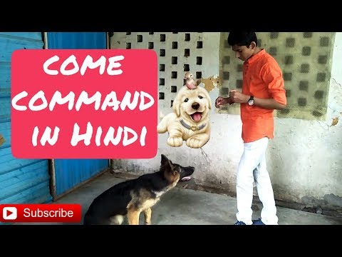 How to train a dog to come when called (Hindi) | Dog training in Hindi | Doggies Squad |
