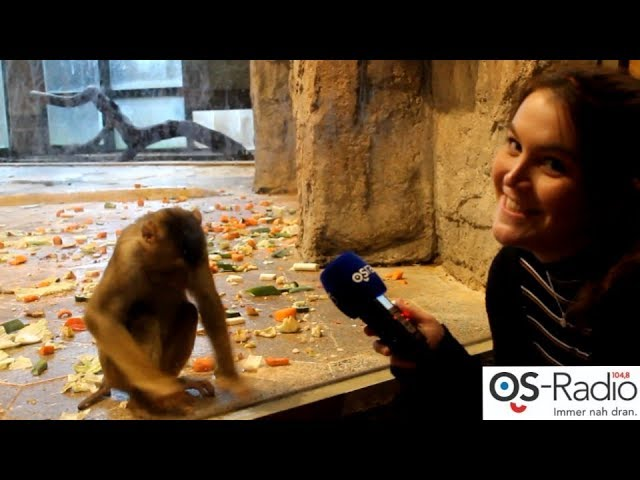 Zoo Osnabrück Inventur - Svenja auf Mission