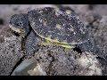 Eastern Box Turtle babies