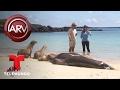 María Celeste nada con leones marinos en Galápagos | Al Rojo Vivo | Telemundo