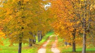 TUDOR GHEORGHE - Niciodata Toamna...(Autumn was never...)