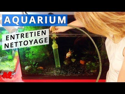aquarium : entretien et nettoyage - youtube