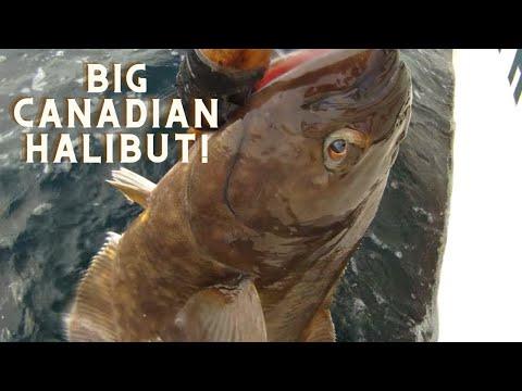 Zeballos Vancouver Island Halibut Fishing