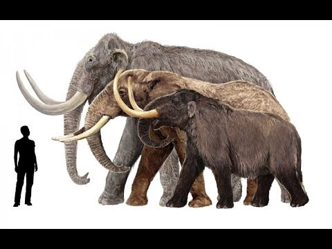 Early Mammals' Survival in Cretaceous Mass...