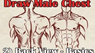 How to Draw a Male Torso Back View - Basics