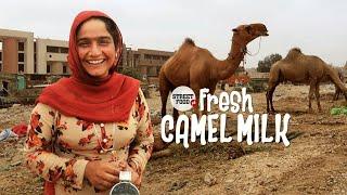 FRESHEST Camel Milk | Street Food Karachi | Pakistan Street Food