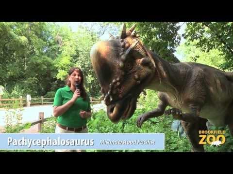 Would You Rather? Episode 2: Parasaurolophus vs. Pachycephalosaurus