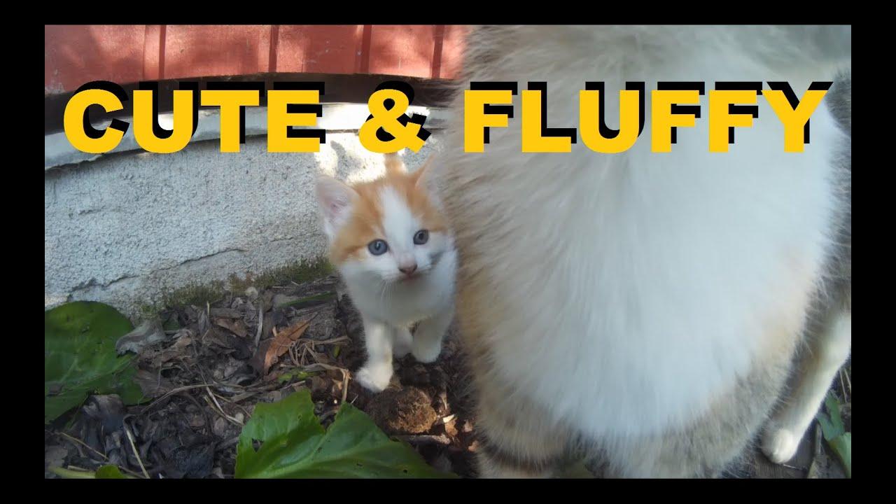 kittycams.net