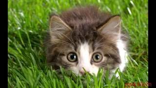 ох уж эти милые кошки часть 2
