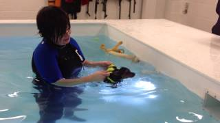 Healthy Hounds Canine Hydrotherapy And Canine Massage -  Puppy Training Swim