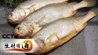《生财有道》 20190806 夏日经济系列 鲍鱼 黄花 鲜美海味富渔家  CCTV财经