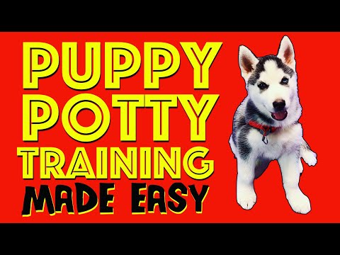how-to-potty-train-your-puppy-easily!-everything-you-need-to-know!---palm-springs-dog-training