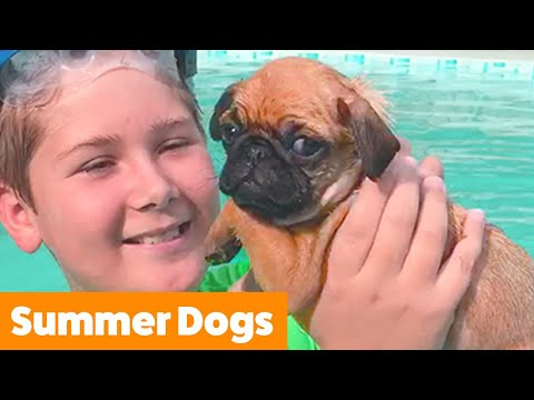 These Dogs Are Ready For Summer | Funny Pet Videos