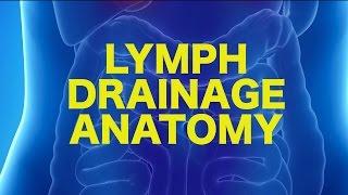 Lymph Anatomy & Drainage    USMLE