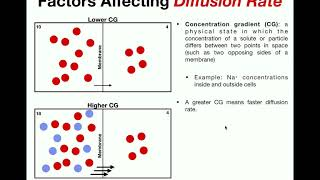 Factors that Affect Diffusion Rate
