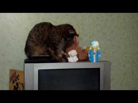 Вопрос: Что делает кошка, когда ей нечего делать?