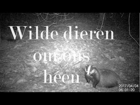 Wilde dieren om ons heen (konijn, drachtige das, vos en muis)