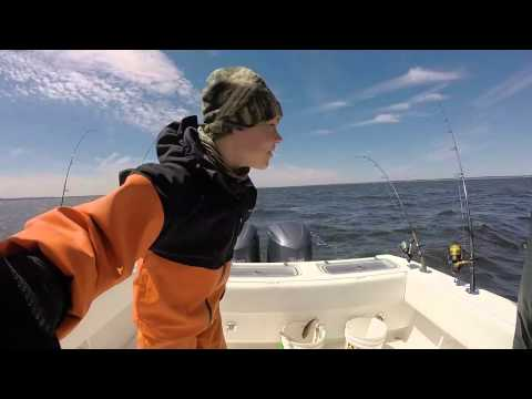Striped Bass (Striper) Fishing in Raritan Bay, NJ Contender 32ST B175h-w