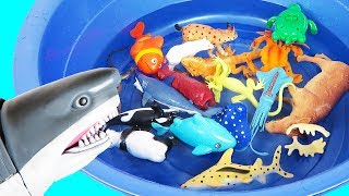 Learn Colors With Wild Zoo Animals Names For Kids Safari Animal Names in Water Shark Toys For Kids
