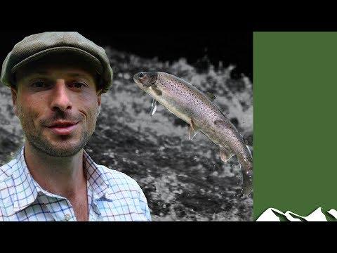 River Bush Salmon