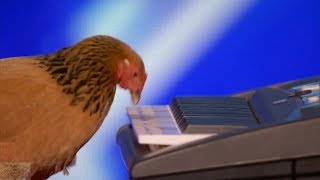 America's Got Talent 2017 Jokgu the Keyboard Playing Chicken Full Audition S12E01