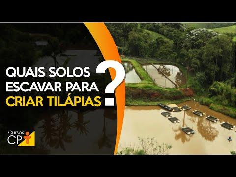 Descubra os tipos de solo para escavar tanques de criação de tilápias!