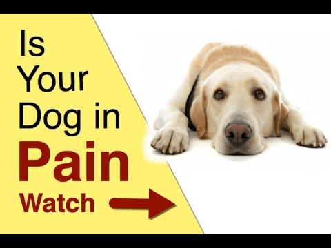 dog medicine for pain