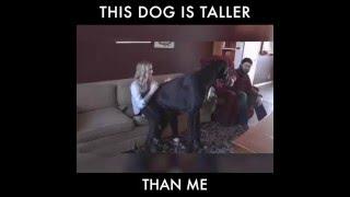 Ist er der größte Hund der Welt?