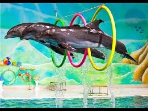 dubai dolphinarium trip