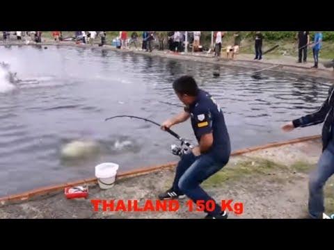 Perlombaan Mancing 3 Negara Dengan Ikan SUPER
