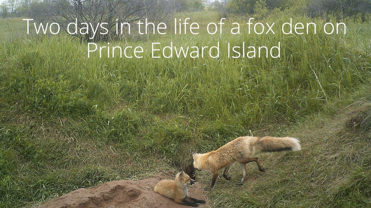 Life In Prince Edward Island