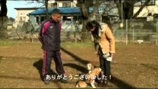 ホームページ⇒ http://ry44.net/youfobe/R4FBIY ~カリスマ訓練士が教え...