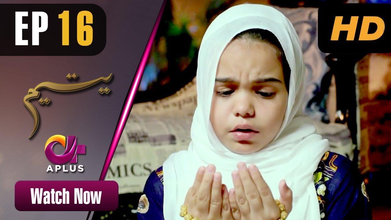 Download Yateem - Episode 16 | Aplus Dramas | Sana Fakhar, Noman Masood, Maira Khan | Pakistani Drama
