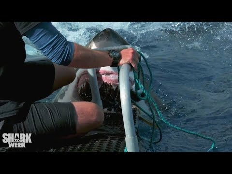 Shark Week's Most Intense Encounter vs. Closest Calls