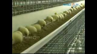 Poultry Farm Equipments Machinery Manufacture Factory , hybiz.tv
